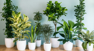 Indoor plant, Shopify best selling product